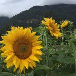 FARM JOB: NELSON, BC – Hummingbird Farm