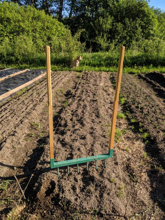 Broadfork for no till field preparation.