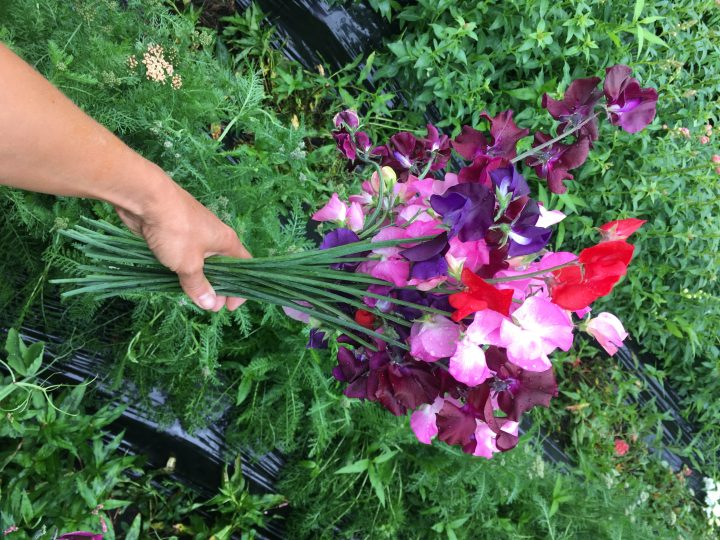Can you smell the sweet peas?