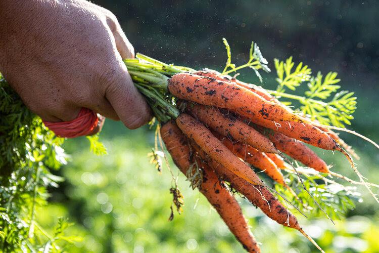 joyfully organic farm, farm job, markham, toronto, ontario