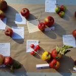 B.C. Business Mentorship Network – Denman Island Heritage Apples