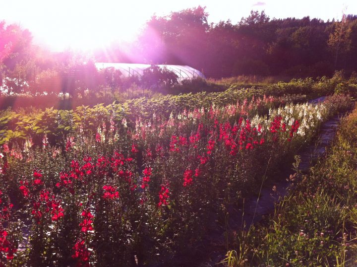 high slope acres, smithers, bc, farm job, young agrarians