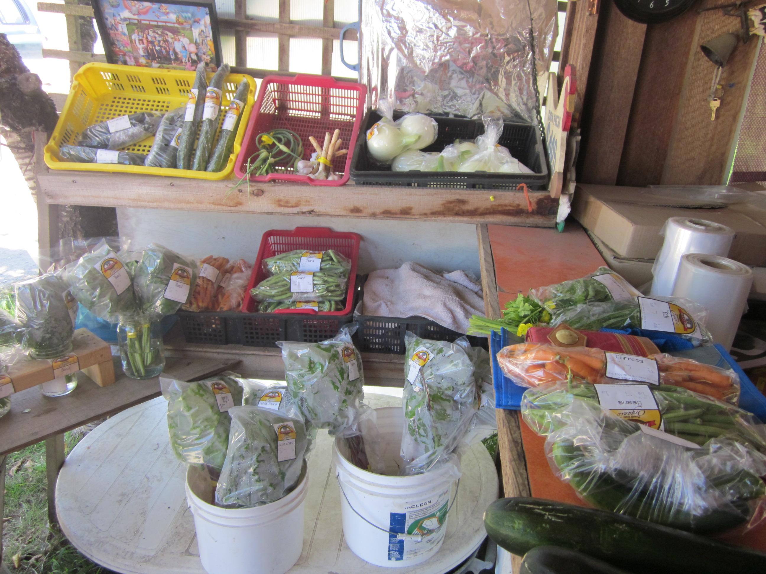 hatch a bird farm, vancouver island, sunshine coast, courtenay, comox, farm job, young agrarians