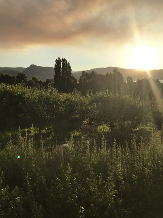 orchard and sun