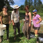 [Filled] FARM JOBS: SAANICH, BC – Square Root Farm, Part-Time Farm Workers