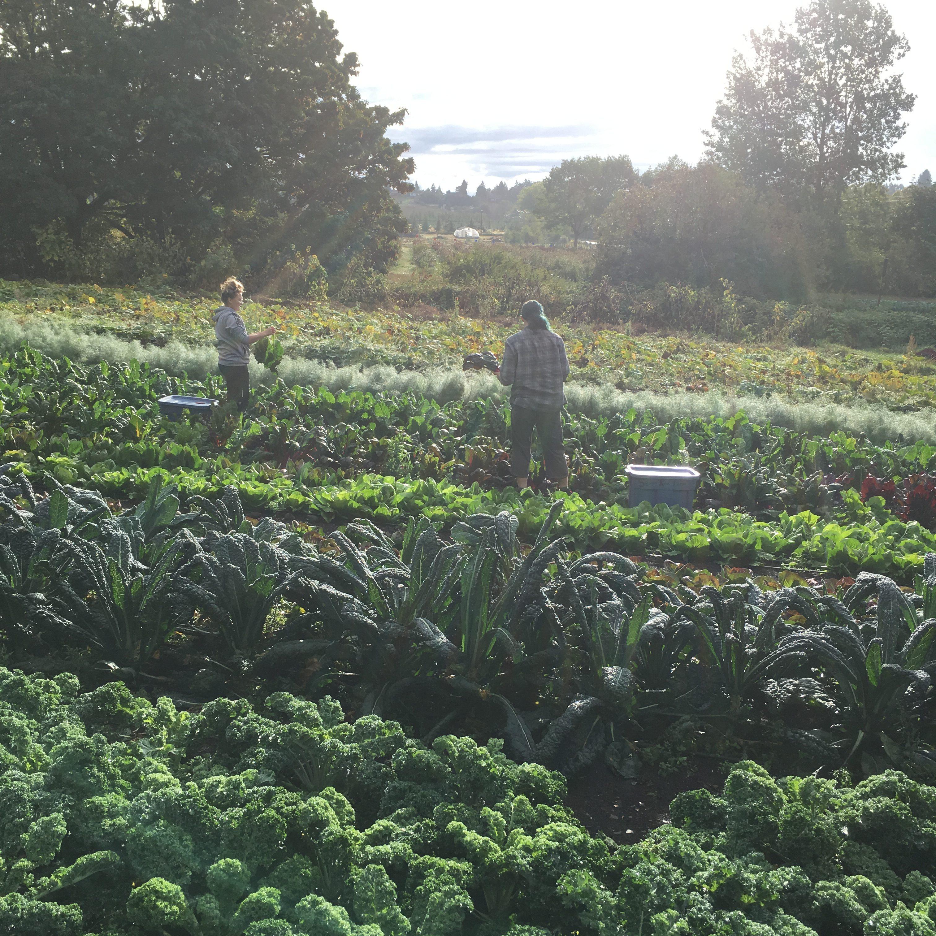 square root farm, farm job, victoria, vancouver island, saanich
