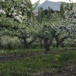 LAND OPPORTUNITY : 6 acres on the Naramata Bench