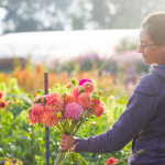 FARM JOB: VANCOUVER, BC – River and Sea Flowers, Farm Crew