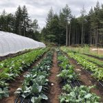 Filled ~ FARM JOB: HORNBY ISLAND, BC – Summer Soul Farm