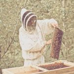 CSA STORIES: WHITE PINE MOUNTAIN APIARY