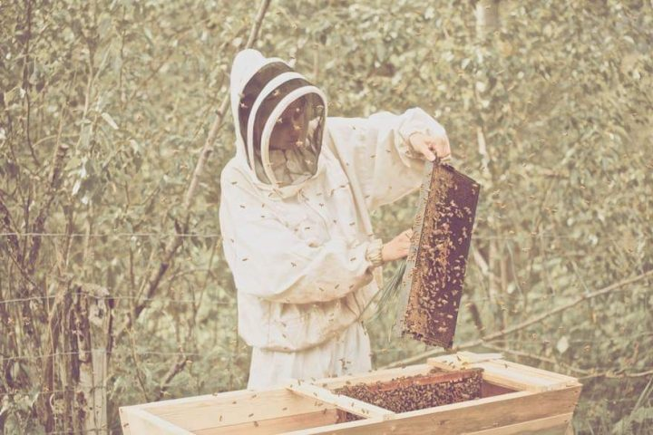 White Pine Mountain Apiary