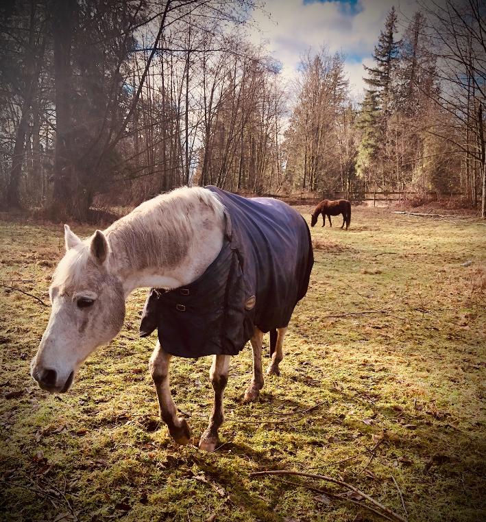 horses at soil & shovel farm, langley, bc, young agrarians, farm jobs