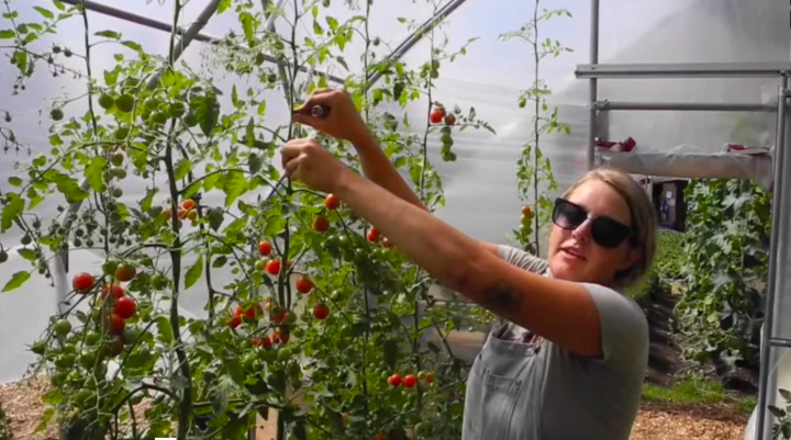 young agrarians farm videos tomato pruning