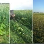 INTERNSHIP: BANGOR, SK – Richards Family Farm and Livestock Ltd.