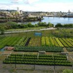 How To Farm a Vacant Urban Lot
