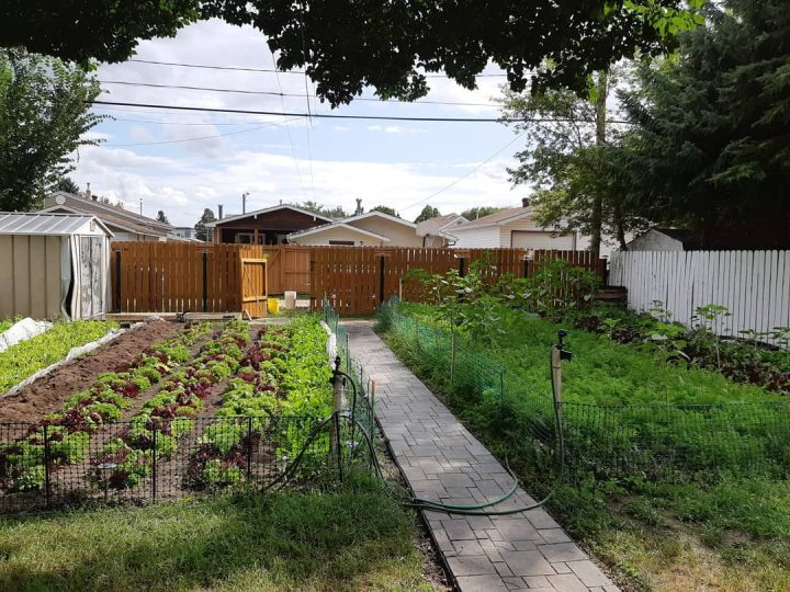 How To Farm a Vacant Urban Lot green sister gardens
