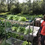 Putting the Young in Young Agrarians: Growing on Gitxsan Territory