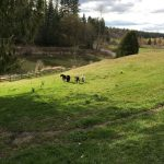 LAND OPPORTUNITY: Fenced & Cross-Fenced 5+ acre Property, Langley BC