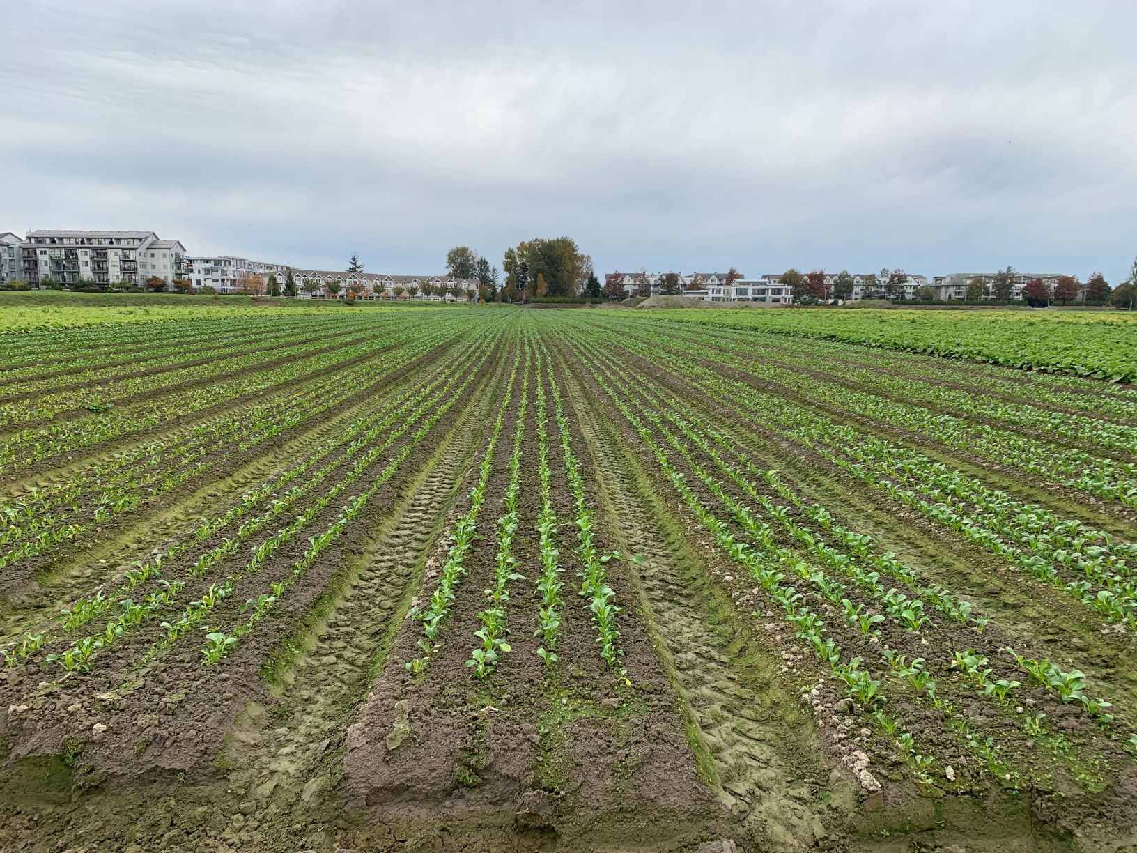 field crops growing panatch group farm job richmond vancouver bc
