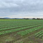 LAND OPPORTUNITY: Up To Eight Acres for Crop Production! – Richmond, BC