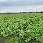 FARM JOB: RICHMOND, BC: Panatch Group, Farm Manager/Coordinator
