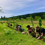 Filled ~ FARM JOB: LADYSMITH, BC – Yellow Point Farms, Farm Hand