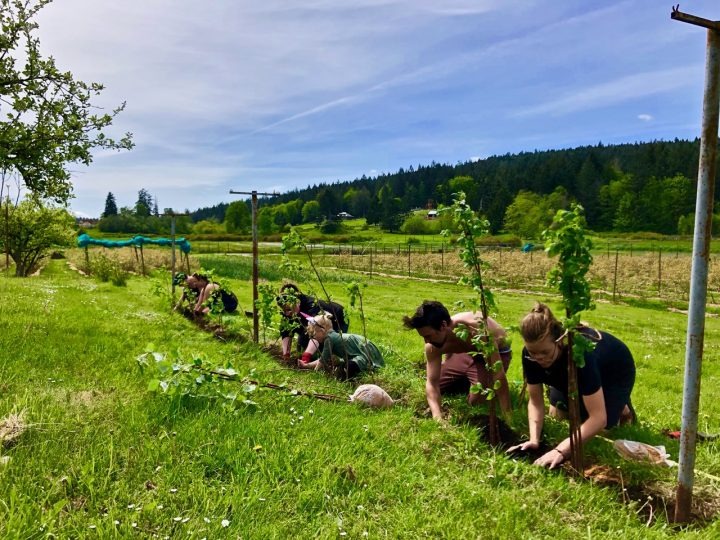 planting at yellow point farm job ladysmith vancouver island young agrarians