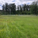 LAND OPPORTUNITY: Quiet, Flat 0.75 Acre Field with Full Exposure – Black Creek, BC