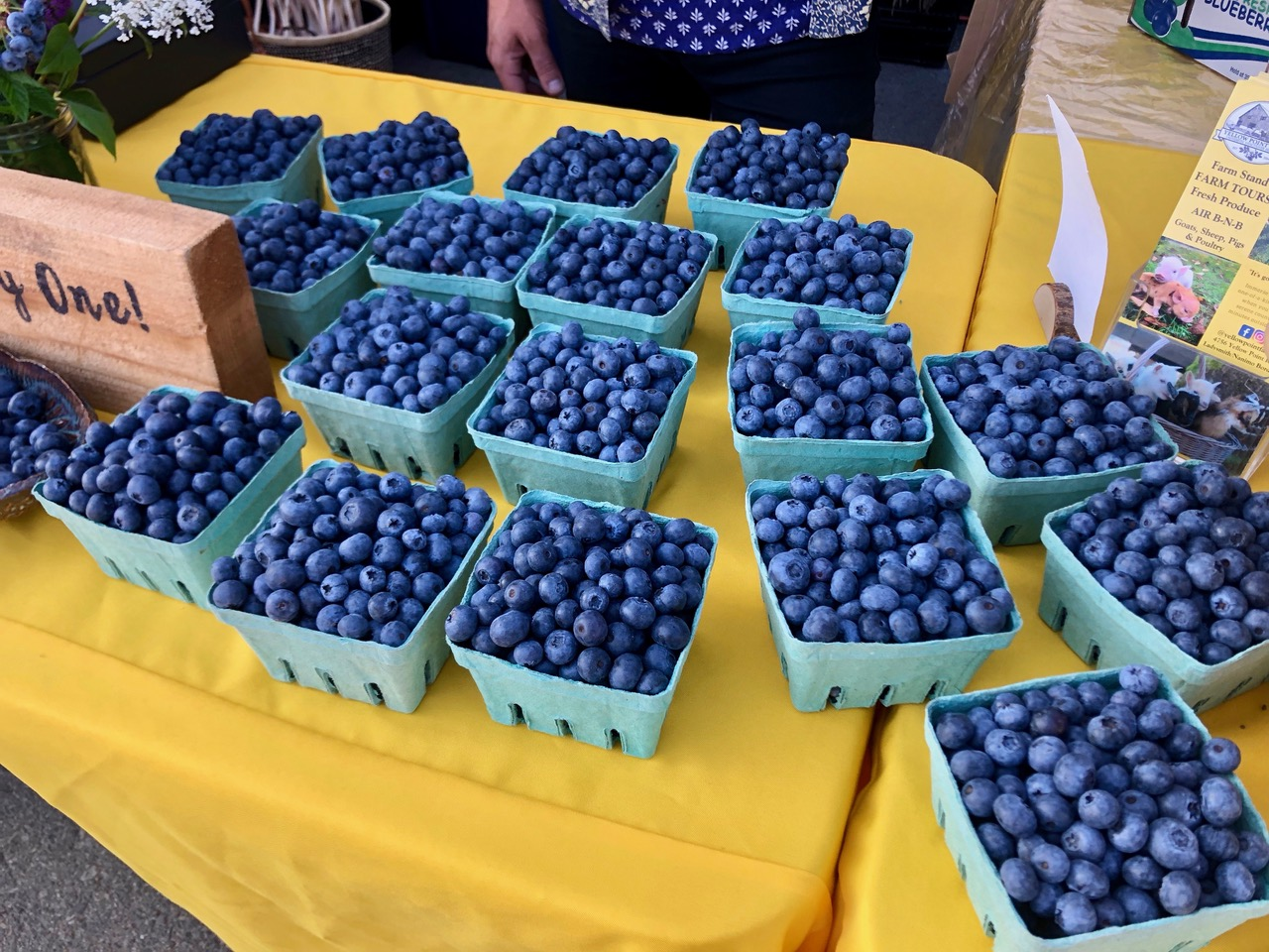 blueberries at yellow point farm job ladysmith vancouver island young agrarians