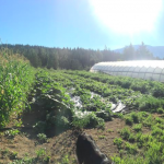 [Filled] FARM JOB: Enderberry Farm, Enderby, BC
