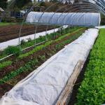 Filled ~ FARM JOB: DUNCAN, BC – Ol' MacDonald Farm, Market Garden Farm Hand