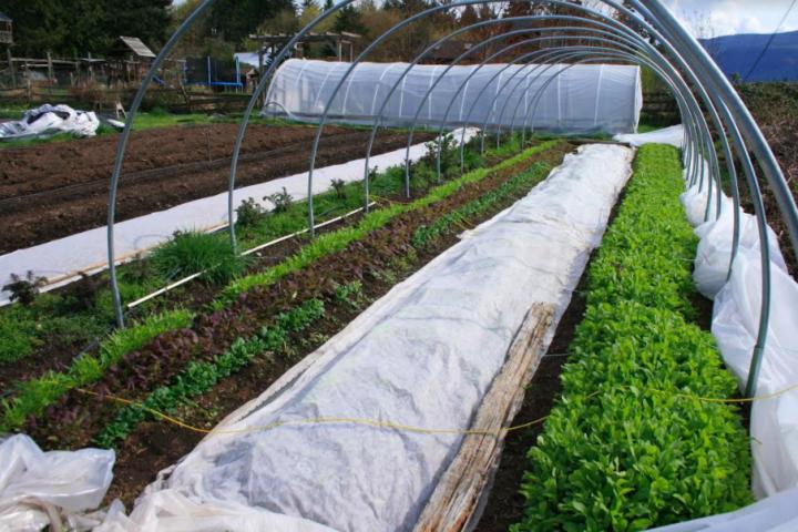 ol' macdonald farm, duncan bc, vancouver island, farm jobs