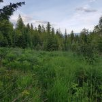 LAND OPPORTUNITY: 35 acres of forest and meadow land near Nelson, BC