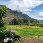 LAND OPPORTUNITY: 3 gorgeous acres in Cawston, BC