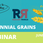June 17: Webinar- Perennial Grains with Rural Routes to Climate Solutions