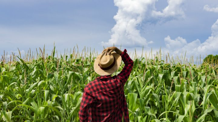 8 Contributions of Black Farmers to Regenerative Agriculture