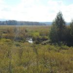 LAND OPPORTUNITY: 160 acres of fields and forest for grazing near Vanderhoof, BC