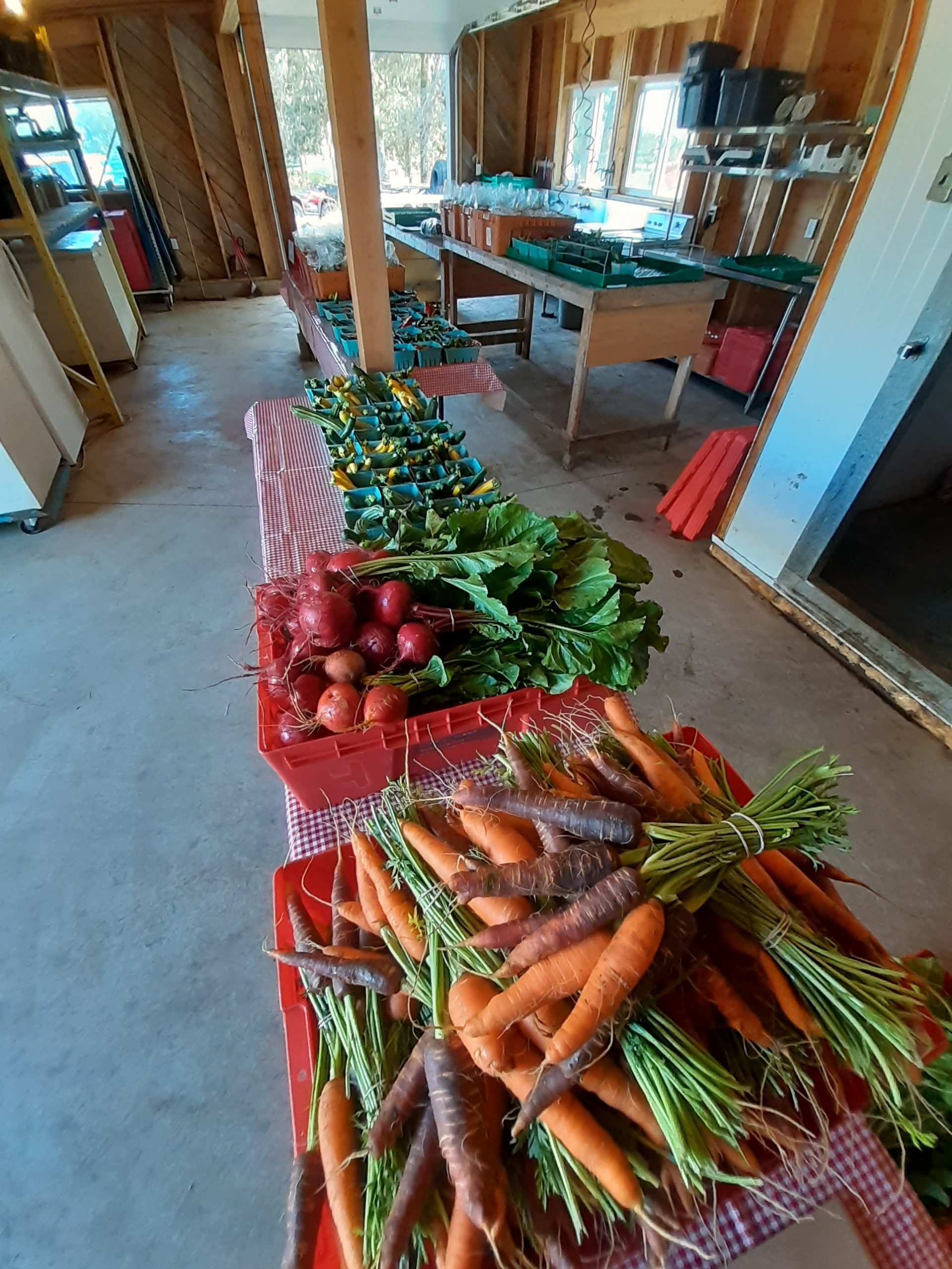 wind whipped farm metchosin vancouver island farm hand young agrarians jobs