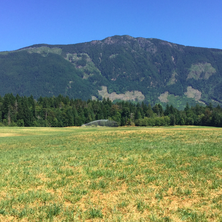field at shannon dairy job port alberni young agrarians