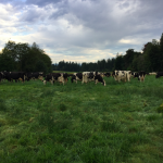 [Filled] FARM JOB: PORT ALBERNI, BC – Milker/ herds person, Shannon Dairy 1988 ltd