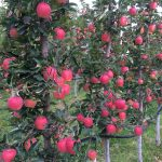 LAND OPPORTUNITY: 8.5 acres Organic Orchard, Keremeos, BC