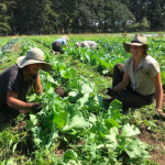 [Filled] FARM JOB: VICTORIA, BC – Sea Bluff Farm, Farmhand