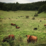 FARM JOB: Wakefield, QC – Rock's End Farm, Fall Grazing Assistant