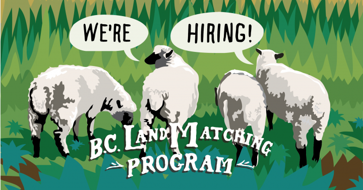 Four sheep with text We're hiring! B.C. Land Matching Program