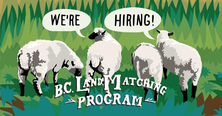 Four sheep with text We're hiring! B.C. Land Matching Program