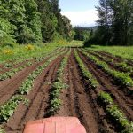 Transition Case Story: Madrona Farm