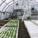 LAND OPPORTUNITY: Turn-Key Aquaponic Greenhouse with Half Acre of Field Space – North Cowichan, BC