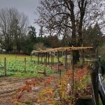 LAND OPPORTUNITY: Quarter Acre Productive Garden with Two Greenhouses – Duncan, BC