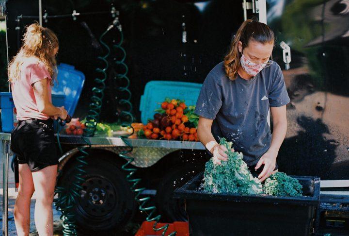 city beet farm sale