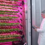 FARM JOB: ARMSTRONG, BC – Greenlion Farms, Principal Greenhouse Grower